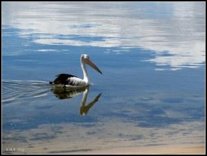 Reflections_November_16