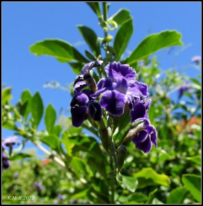 purple flower on a potted tree_new camera