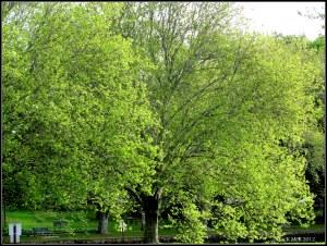 Spring green 2012
