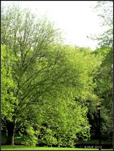 Spring green_2 2012