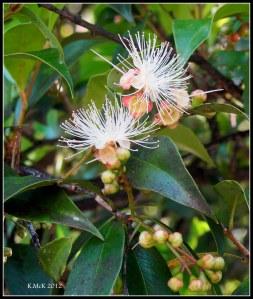 unknown delicate blossom
