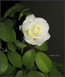 inside rose_1