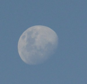 moon cropped