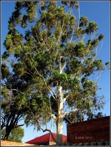 someone's beautiful backyard tree