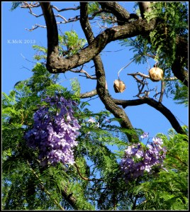 still flowering