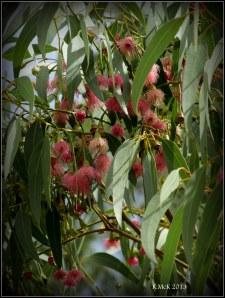 blossom_murdoch_2