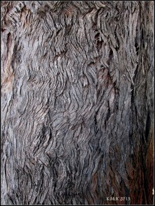 boc tree bark_2