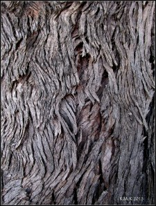 box tree bark