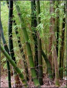 murdoch_bamboo_1