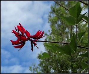 red flower_murdoch