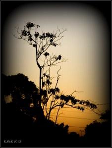 that tree_2