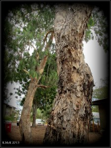 trees_murdoch