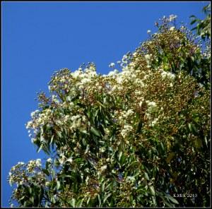 y_tree fluff blossom