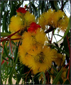 yellow blossom_1