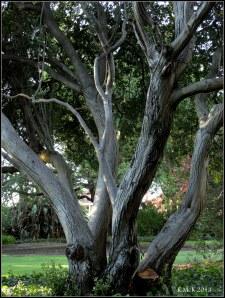 r_tree