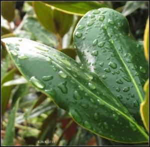 raindrops_3