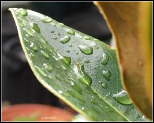 raindrops_4