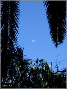 midmorning moon
