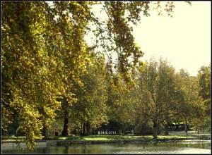 Hydepark_16