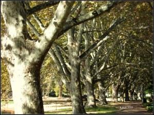 Hydepark_18