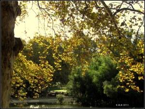 Hydepark_8