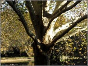Hyde park_16