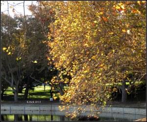 Hyde park_17