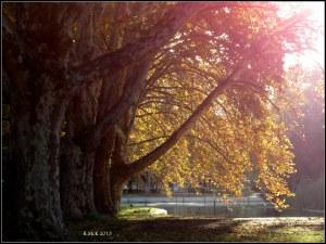 Hyde park_2