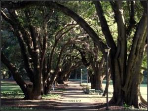 Hyde park_5