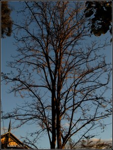 light on branches_2