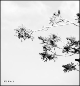 black and white_8