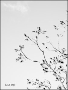 black and white_9
