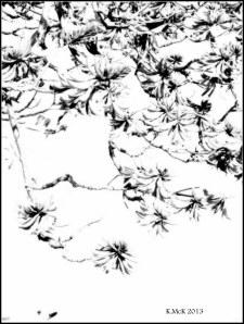 flame tree_black and white_2