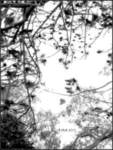 flame tree_black and white_4
