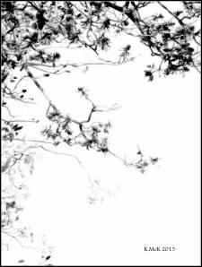 flame tree_black and white_6