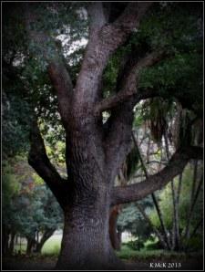 hyde park_tree