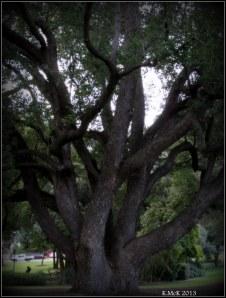 hyde park_tree_2