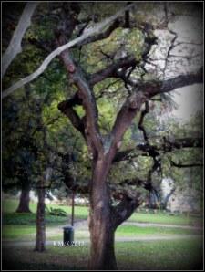 hyde park_tree_5