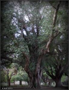 hyde park_trees