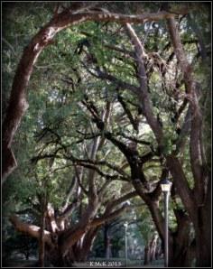 hyde park_trees_2