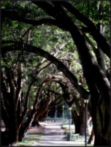 hyde park_trees_3