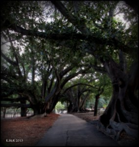 hyde park_trees_4