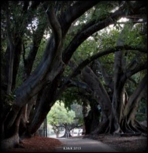 hyde park_trees_5