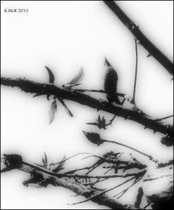 Matilda bay_black and white_1