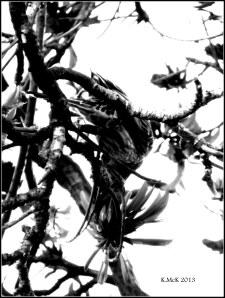 Matilda bay_black and white_9