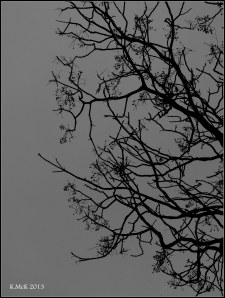 Matilda Bay_dark day_1