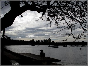 Matilda Bay_dark day_3