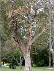 Matilda Bay_trees_1