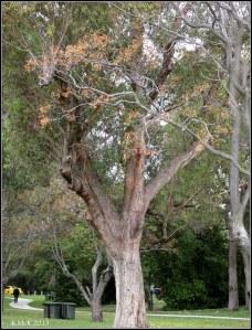 Matilda Bay_trees_1