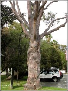 Matilda Bay_trees_10